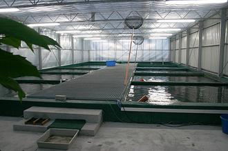 Neues Koi Einfuhrzentrum 2007 in Betrieb genommen